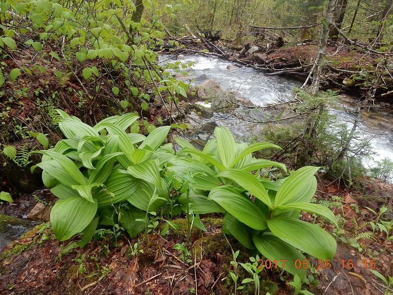 05-26 16;15 succulent greens