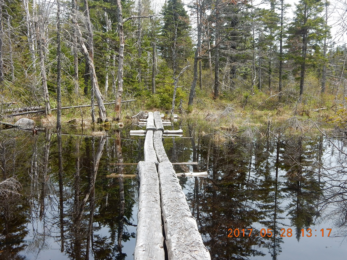 05-28 13;17 Through a beaver pond